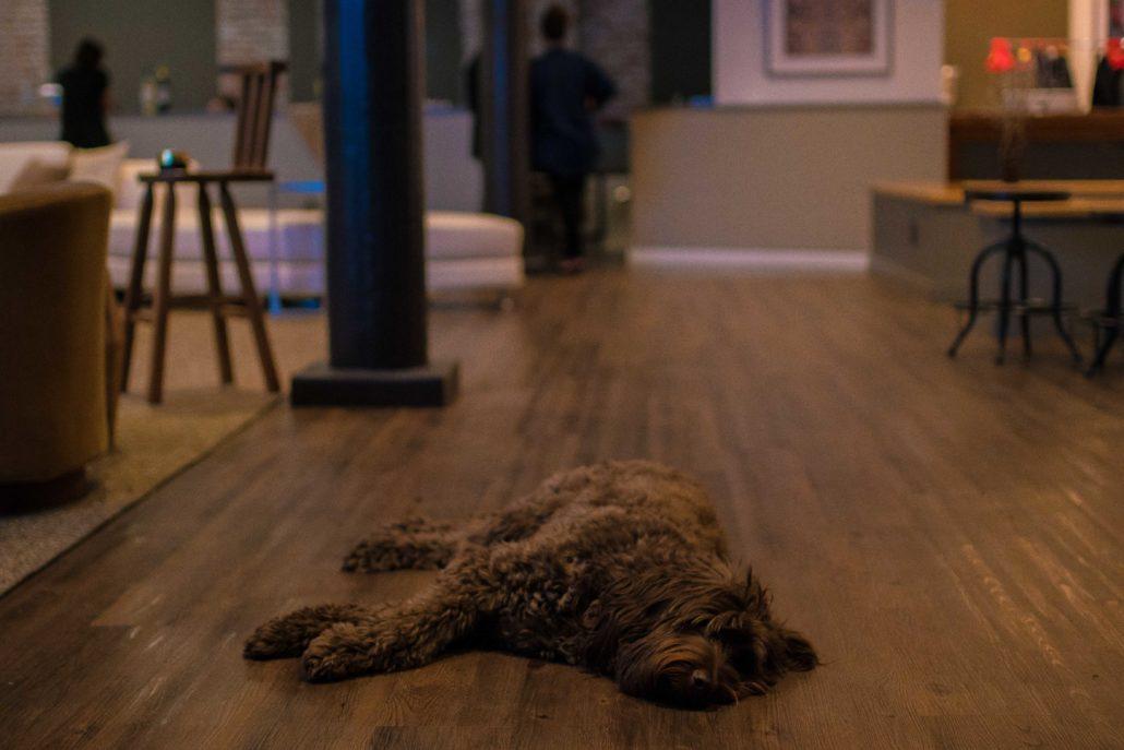 599 West Ollie Puppy